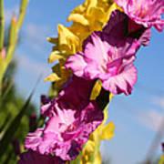 Cheerful Gladiolus Art Print