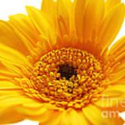Cheerful Yellow Art Print