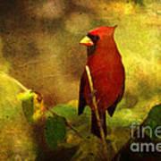 Cheery Red Cardinal  Art Print