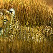 Cheetah - In The Wild Grass Art Print
