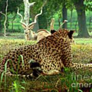 Cheetah Lunch-87 Art Print