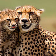 Cheetah Mother And Cub In Masai Mara Art Print