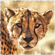Cheetah One Art Print