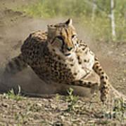 Cheetah Run 2 Art Print
