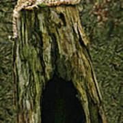 Cheetah Tree Perch Art Print