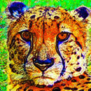 Face Of The Cheetah Art Print