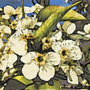 Cherry Blooms Art Print