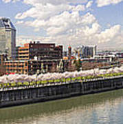 Cherry Blossom Along Portland Oregon Waterfront Panorama Art Print