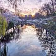 Cherry Blossom Lagoon Art Print