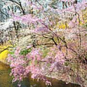 Cherry Blossom Land Art Print