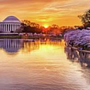 Cherry Blossom Sunrise On The Tidal Art Print