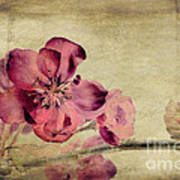 Cherry Blossom With Textures Art Print by John Edwards