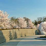 Cherry Blossoms 2013 - 022 Art Print