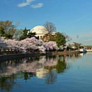 Cherry Blossoms 2013 - 041 Art Print