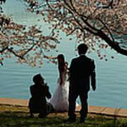 Cherry Blossoms 2013 - 054 Art Print