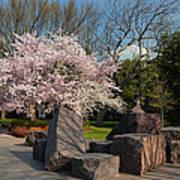 Cherry Blossoms 2013 - 058 Art Print