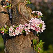 Cherry Blossoms 2013 - 064 Art Print