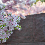 Cherry Blossoms 2013 - 066 Art Print by Metro DC Photography