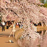 Cherry Blossoms 2013 - 076 Art Print