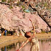 Cherry Blossoms 2013 - 077 Art Print