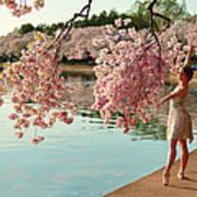 Cherry Blossoms 2013 - 085 Art Print