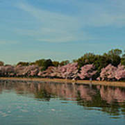 Cherry Blossoms 2013 - 088 Art Print