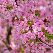 Cherry Blossoms 2013 - 096 Art Print