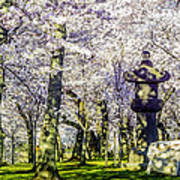 Cherry Blossoms 2014. Art Print