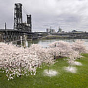 Cherry Blossoms Along Willamette River Art Print