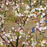 Cherry Blossoms And Blue Birds Print by Blenda Studio