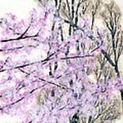 Cherry Blossoms In Spring Snow Art Print