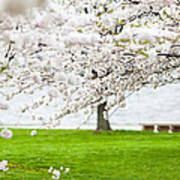 Cherry Blossoms On The Shore Of Fort Mchenry Art Print by Susan Schmitz