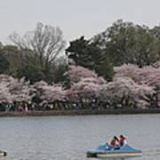 Cherry Blossoms - Washington Dc - 011315 Art Print by DC Photographer