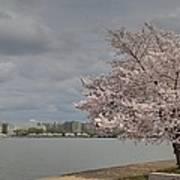 Cherry Blossoms - Washington Dc - 011362 Art Print by DC Photographer