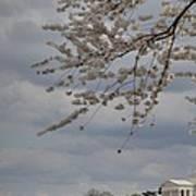 Cherry Blossoms With Jefferson Memorial - Washington Dc - 011312 Art Print by DC Photographer