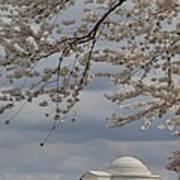 Cherry Blossoms With Jefferson Memorial - Washington Dc - 011313 Art Print