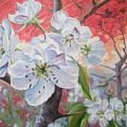 Cherry In Blossom Red Art Print by Andrei Attila Mezei