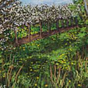 Cherry Orchard Evening Art Print