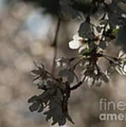 Cherry Tree Blossom Macro Art Print