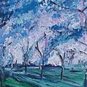 Cherry Trees Impressionism Art Print