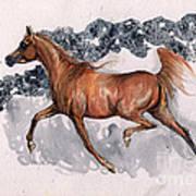 Chestnut Arabian Horse 2014 11 15 Art Print