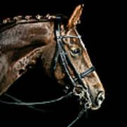 Chestnut Dressage Horse Groomed For A Art Print