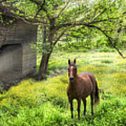 Chestnut Horse In A Sunny Meadow Art Print