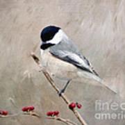 Chickadee And Berries Art Print