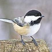 Chickadee On A Used To Be Tree Art Print