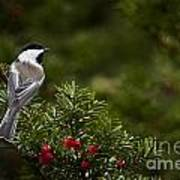 Chickadee Pictures 373 Art Print