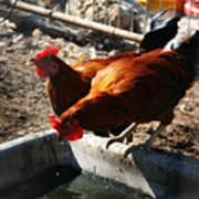 Chicken A La Carte Art Print