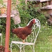 Chicken In The Chair Art Print