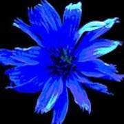 Chicory 3 Art Print