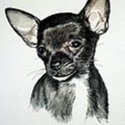 Chihuahua Black 2 Art Print